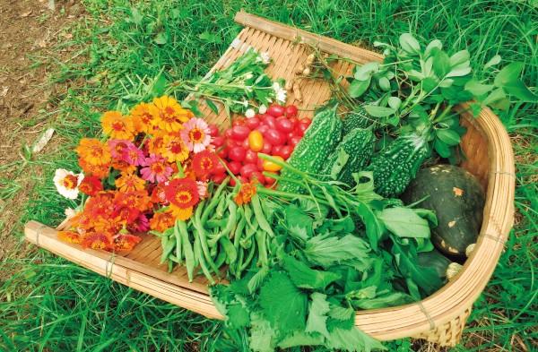 【恵泉】食や農をもっと身近な学びへ